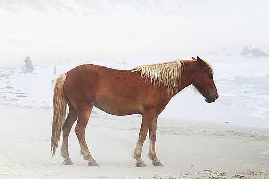 Wild Horses At Corolla, NC 7 by David Stasiak