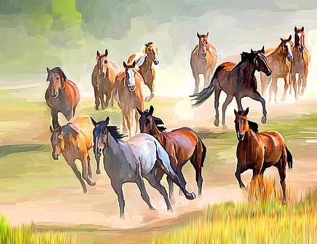 Wild Horses by Ata Alishahi