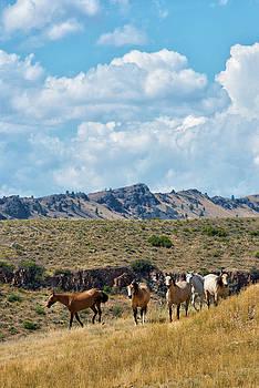 Wild Horses, Holter Lake by Michael Gallitelli