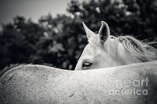 Dimitar Hristov - Wild Horses In Love
