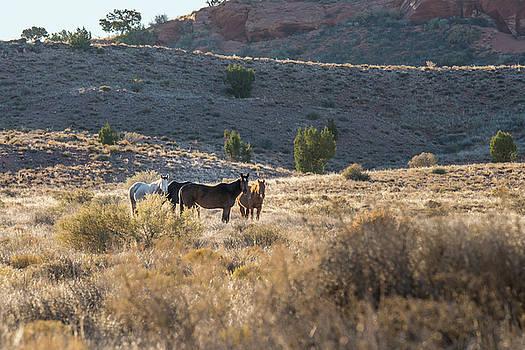 Jon Glaser - Wild Horses in Monument Valley