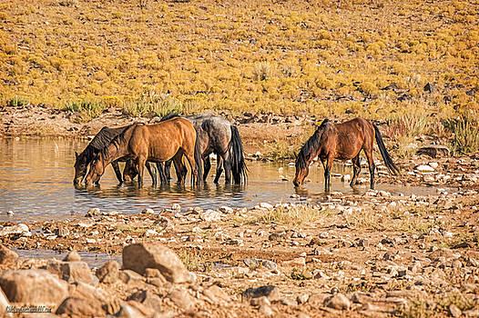 LeeAnn McLaneGoetz McLaneGoetzStudioLLCcom - Wild Horses in Water