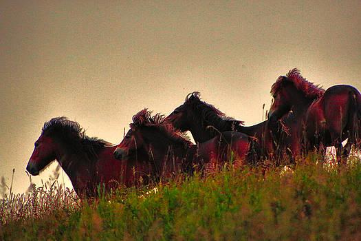 Wild Horses by Ingrid Dendievel