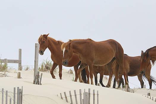 Wild Horses Marching by David Stasiak