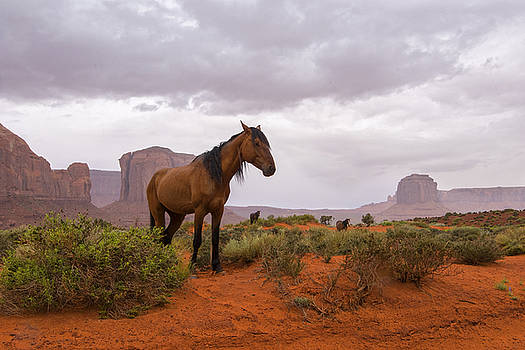Wild Horses of Monument Valley by Brad Scott