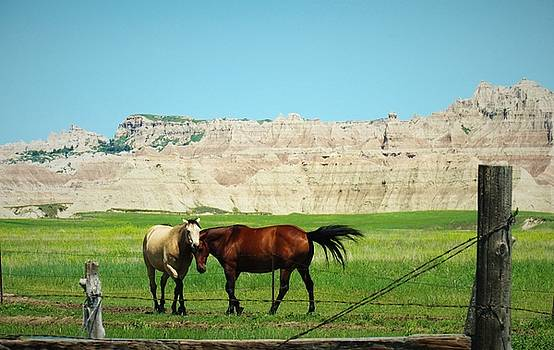 Wild Horses of South Dakota by Elizah Monai
