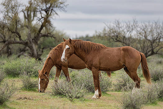 Saija Lehtonen - Wild Horses of the Sonoran