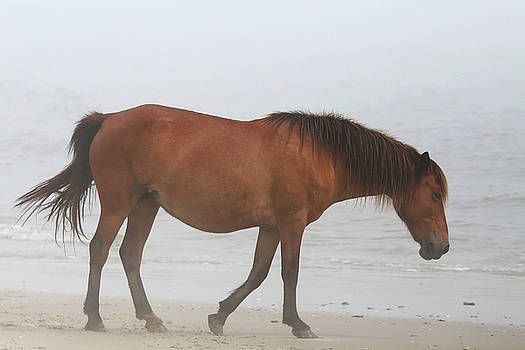 Wild Horses on the Beach 3 by David Stasiak