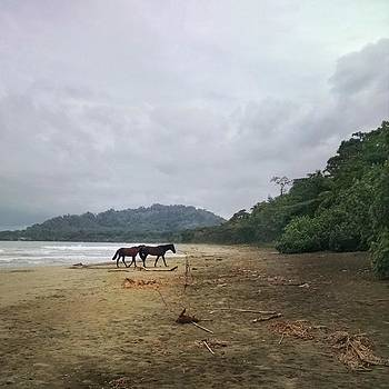 Wild Horses. On The Beach. Yeah by Melissa Yosua-Davis