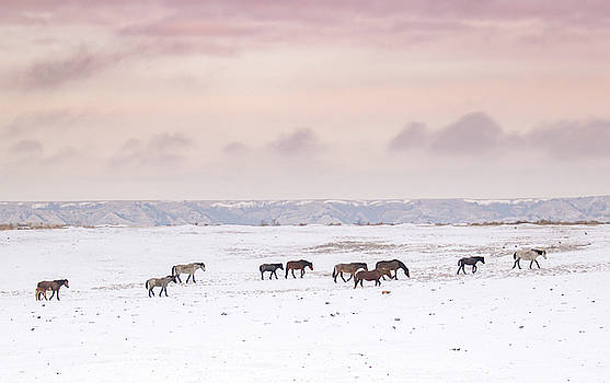 Wild Horses Out West by Kelly Marquardt