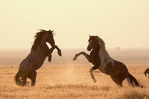 Wild Horses by Wesley Aston