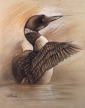 Wild Loon - Wildlife Drawing by Dave Kobrenski