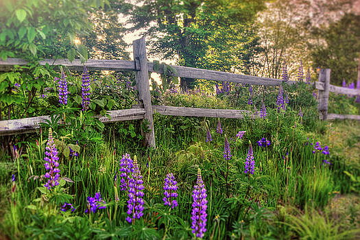 Wild Lupines on Country Road by Joann Vitali