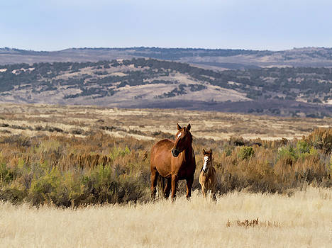 Wild mare with young foal in sand wash basin by Nadja Rider