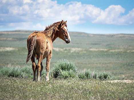 Wild Mustang Colt of Sand Wash Basin by Nadja Rider
