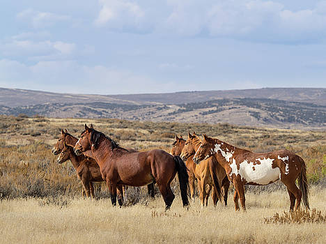 Wild Mustang Family Band in Sand Wash Basin by Nadja Rider