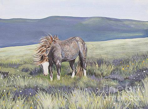 Wild Mustang Stallion by Jordan Parker