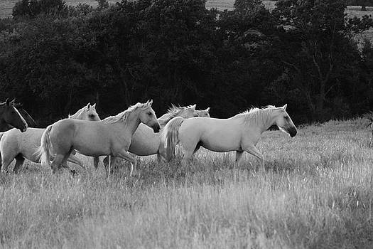 Wild Mustangs by Vonda Barnett