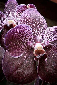 Jonathan Hansen - Wild Orchid 1