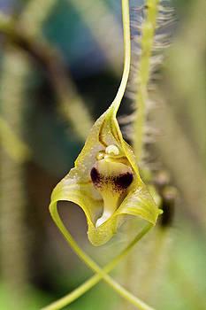 Heiko Koehrer-Wagner - Wild Orchid