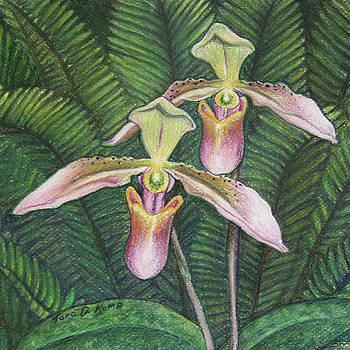 Wild Orchid Twins by Tara D Kemp