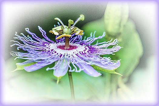 Barry Jones - Wild Passion - Floral