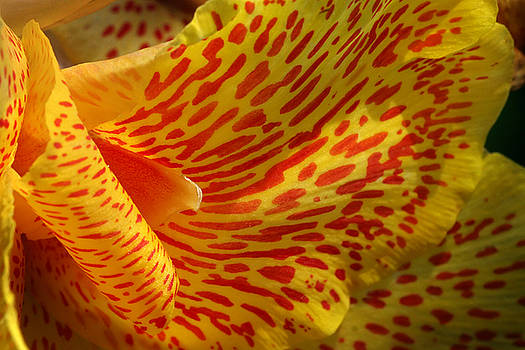 Jeannie Burleson - Wild Petals