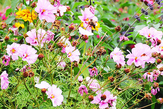 Wild Pink Cosmos in Watercolour Treatment by Marites Reales