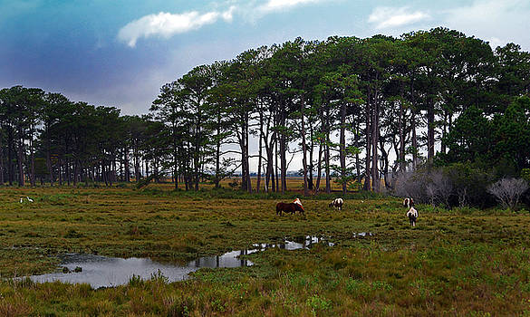 Wild Ponies of Assateague by Lori Tambakis