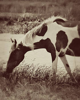 Wild Pony on Assateague Island by Karen Fowler