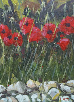 Wild Poppies by Fred Urron