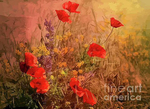Wild Red Poppies by Clive Littin