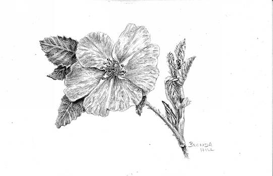 Wild Rose by Brenda Hill
