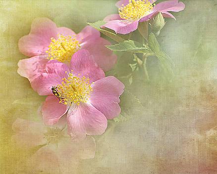 Wild Roses by TnBackroadsPhotos