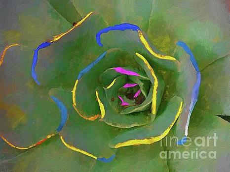 Wild Succulent by John Kolenberg