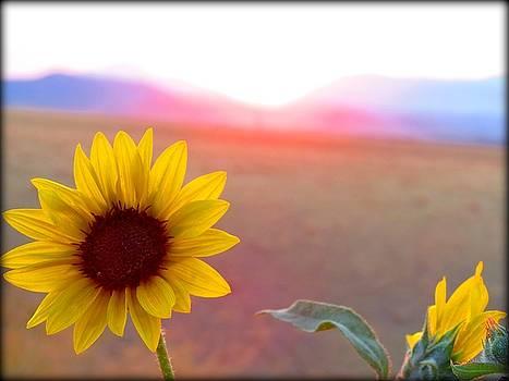 Leah Grunzke - Wild Sunflower