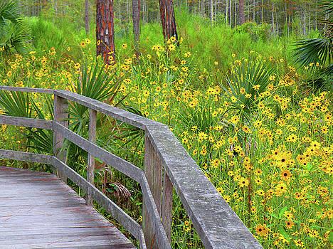 Wild Sunflower Walk by Rosalie Scanlon