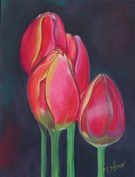 Wild Tulip Bunch by Marcia  Hero
