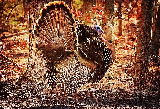 Wild Turkey by Angel Cher
