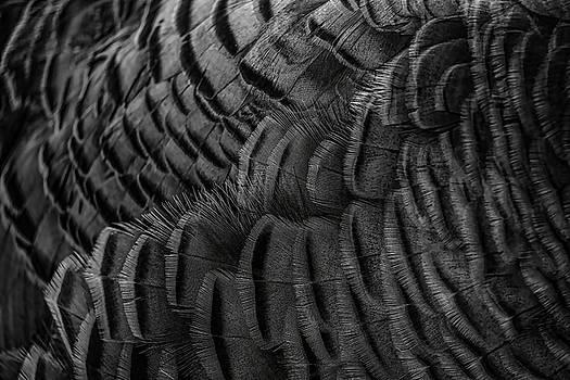 Dale Kauzlaric - Wild Turkey Hen Feather Abstract Black and White