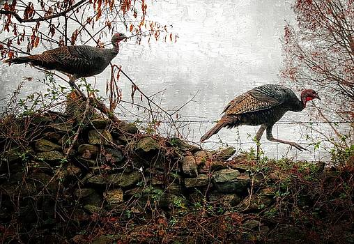 Wild Turkeys by Scott Fracasso