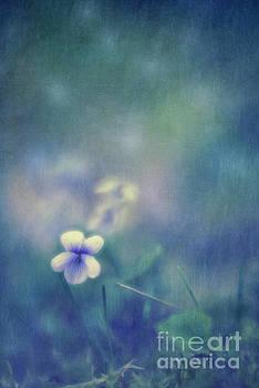 Wild Violets by Priska Wettstein