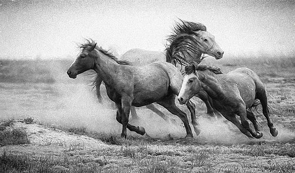 Wild West by Kelly Marquardt