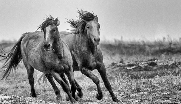 Wild West Wild Horses by Kelly Marquardt