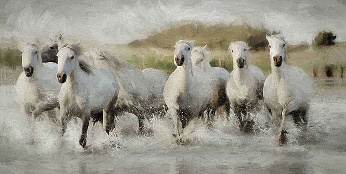 Wild White Horses of the Camargue I by Karen Lynch