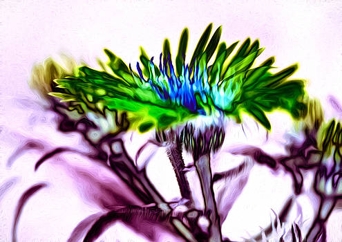 Steve Harrington - Wild Wildflower