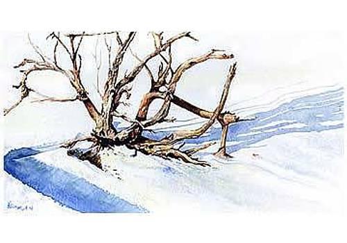 Wild Wood by Kris Killman