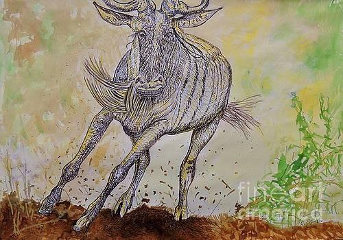 Caroline Street - Wildebeest