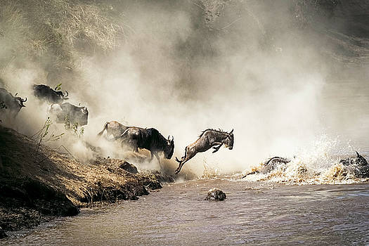 Wildebeest Leaping in Mid-Air Over Mara River by Susan Schmitz