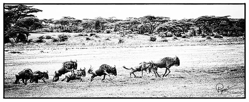 Wildebeest On The Move by PiperAnne Worcester